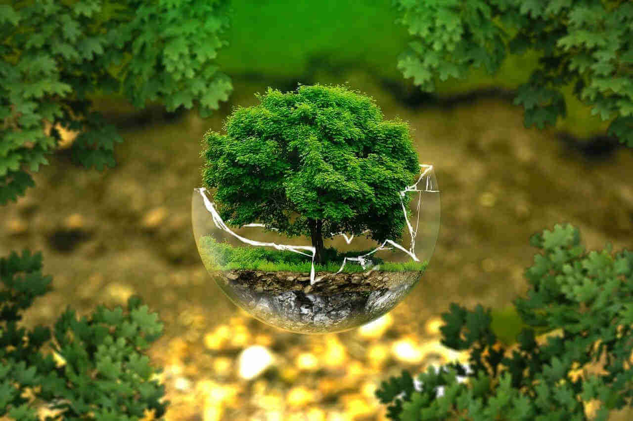 Umweltschutz - ehrenamt-Blog von e24